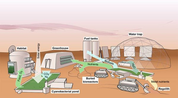 Artwork by Sean McMahon, originally published in: Verseux et al. (2016). Sustainable life support on Mars – the potential roles of cyanobacteria. Int. J. Astrobiol. 15, 65–92.